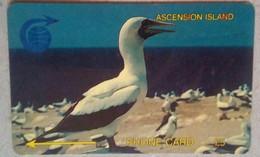 2CASA Booby Bird 5 Pounds - Ascension