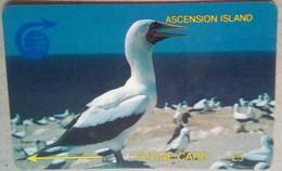3CASA Booby Bird  5 Pounds - Ascension (Insel)