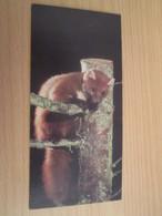 Image De Collection NESTLE MERVEILLES DU MONDE N°441 LA MARTRE - Other Collections