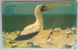 4CASA Booby Bird 5 Pounds - Ascension