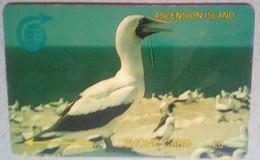 5CASA Booby Bird 5 Pounds - Ascension