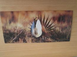 Image De Collection NESTLE MERVEILLES DU MONDE N°370 LA POULE DES ARMOISES - Other Collections