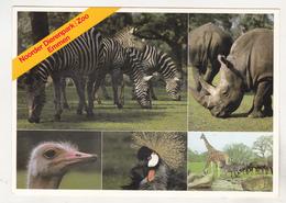 Germany Old Uncirculated Postcard - Animals - Dierenpark Emmen - Stieren