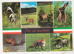 Germany Old Uncirculated Postcard - Animals - Animals In Sauerland - Stieren