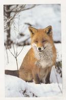 Germany Old Uncirculated Postcard - Animals - Fox - Stieren