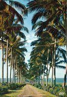 1 AK Insel Reunion * Allée De Cocotiers * Übersee-Departement Von Frankreich - Insel Im Indischen Ozean - IRIS Karte - Reunión