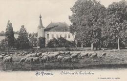 Saint Trond ,(SINT-TRUIDEN )LE CHATEAU DE TERKEELEN , Schaap ,mouton, ( Sint-Truiden )  Kasteel - Sint-Truiden