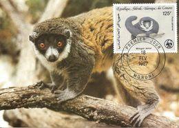 1987 - COMORES - Lemurien Mongoz Lemur - Comoros