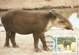 1985 - NICARAGUA  -  Tapir D'amerique Centrale - Nicaragua