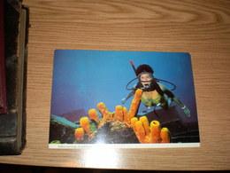 Balboa Wreckage Grand Cayman B W I  Diver - Kaimaninseln