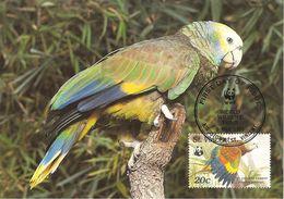1989 - Saint-Vincent-et-les-Grenadines - Kingstown - Parrot Perroquet Amazone - Saint-Vincent-et-les Grenadines