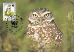 1994 - ARUBA  - BURROWING OWL - Chouette Des Terriers - Aruba