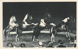 Spectacle : Cirque : RADIO-CIRCUS : La Pyramide à Quatre Chevaux : Al. GRUSS : Cheval - Circus
