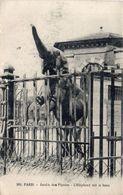 PARIS - Jardin Des Plantes  - L' Eléphant Fait Le Beau  (104358) - Unclassified