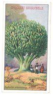 Chromo Chocolat Aiguebelle : Les Arbres Extraordinaires : Euphorbe Arborescente Afrique Centrale - Aiguebelle