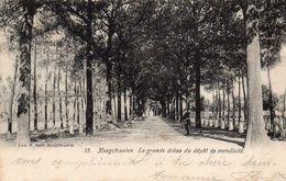 Hoogstraeten - La Grande Dréve Du Dépot De Mendicité / 1908 - Hoogstraten