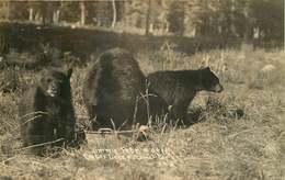 CARTE PHOTO OURS - Bears