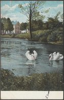 A Pair Of Swans, 1905 - Postcard - Birds