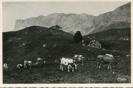 VACHES(AIME) - Vaches