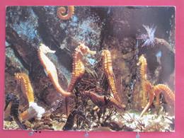 Guadeloupe - Aquarium De La Guadeloupe - Hippocampes Tropicaux - Scans Recto-verso - Unclassified