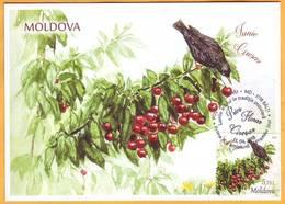 2018 Moldova Moldavie Maxicard Folk Traditions. Months Of The Year. June. Starling. Cherries. - Moldavia