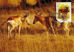 1991 - MOCAMBIQUE Maputo - Mozambique - Bubale De Lichtenstein - Antilope Hartebeest - Mozambique