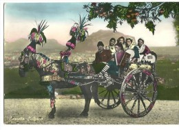 ! - Italie - Sicile - Messine - La Charrette Sicilienne - Photo Carte Postale En Couleur - Folklore