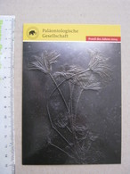 FS1 FOSSILI POST CARD GERMANY - FOSSIL DES JAHRES 2014 - SEIROCRINUS - Fossils