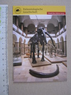 FS1 FOSSILI POST CARD GERMANY - FOSSIL DES JAHRES 2013 - GAMPHOTHERIUM - Fossils