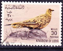 Libyen - Tropfenflughuhn (Pterocles Senegallus) (MiNr: 182) 1965 - Gest Used Obl - Libië