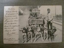 Burxelles Marchand Vendeur De Lapins Poules Animaux ? - Attelage De 5 Chiens - Métiers Anciens - R & J D 4241 Csina - Petits Métiers