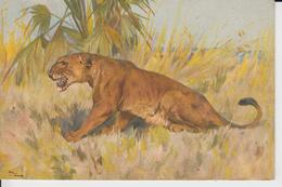 LIONS -  Carte Fantaisie Lionne - Edit Stehli - Lions