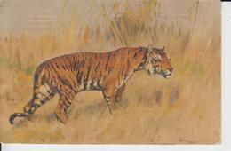 TIGRES -  Carte Fantaisie Tigre - Edit Stehli - Tigres