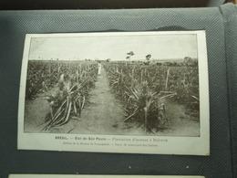 Cpa BRESIL  Etat De Säo Paulo. Plantation D'ananas à Boituva. Recto-verso. - São Paulo