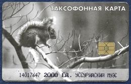 RUSSIA - RUSSIE - RUSSLAND USSURIYSKI MYES USSURIYSK TOWN 2000 UNITS CHIP PHONECARD TELEPHONE CARD ANIMALS SQUIRREL - Russia
