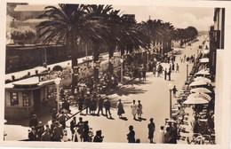 PORTUGAL. ESPINHO. AVENIDA 8. ED PAPELERA E LIVARIA SOUSA.-TBE-BLEUP - Portugal