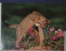 Petit Calendrier Poche 2001 Cartier Bresson Chat Panier Fleurs - Calendars