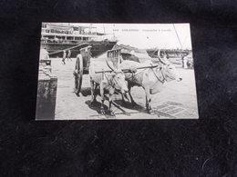Sri Lanka . Ceylon . Ceylan .Charrette à Boeufs . Colombo .Avant 1904 .Voir 2 Scans . - Sri Lanka (Ceylon)