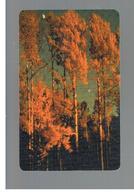 ROMANIA (ROMANIA) - 2000  AUTUMN, TREES - USED  -  RIF. 10753 - Romania