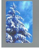 ROMANIA (ROMANIA) - 2000  WINTER, TREE - USED  -  RIF. 10753 - Romania