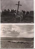 2 Cartes: Moutons - Paix Sur L'Alpe F.Francou, Briançon, Carte Neuve Et Troupeau Sur Le Causse Méjean Yvon - - France