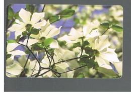 ROMANIA (ROMANIA) - 2001 FLOWERS      - USED  -  RIF. 10756 - Romania