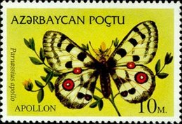 Azerbaïdjan - Faune - Félins - Azerbaïjan