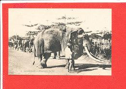CAMBODGE  Cpa Animée Elephant Du >>Roi        3 - Cambodia