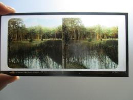 PHOTO Autochrome Versailles Paris Signe G Papot - Stereoscopic