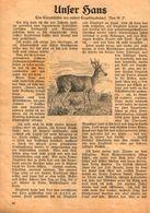 Unser Hans (Eine Tiergeschichte Aus Unserer Erzgebirgheimat) / Druck, Entnommen Aus Kalender / 1933 - Books, Magazines, Comics