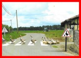 CPSM/gf  HUMOUR.  Passage Protégé Dans Le Sud-Ouest, Oies, Tracteur...F156 - Humor