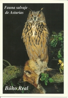 POSTAL BUHO REAL - Pájaros