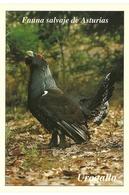 POSTAL UROGALLO - Pájaros