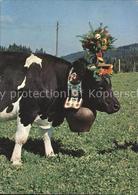 61565791 Kuehe Kuhglocke Gruyere La Reine Du Tropeau / Kuehe / - Vaches